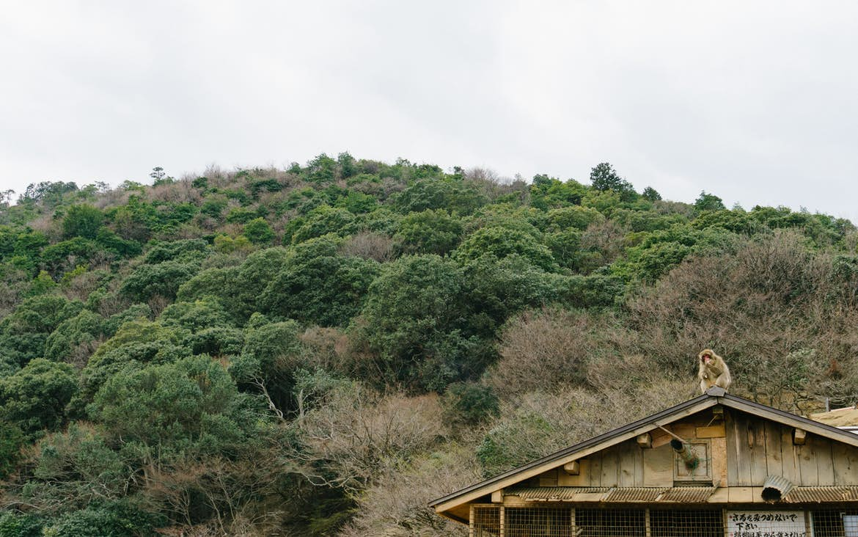 Arishiyama